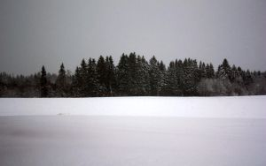 trees and snow by Karnoffel