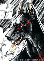 ACEO Doberman by m-u-h-a