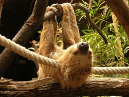 Sloth by jynto