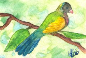 parrot postcard by Indian-Ink