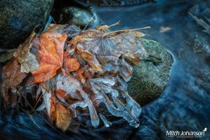 Ice Covered Leafs by mjohanson