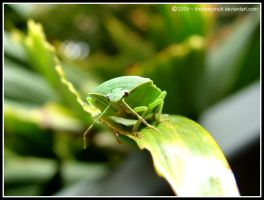 Green Beetle 1 by thefunkyinuit