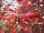Red Leaves by ineptartist