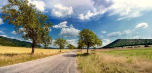 Road to nature by radog