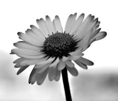 black and white flower 03 by glad2626