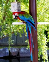 Tropical Parrot by Hertz18360