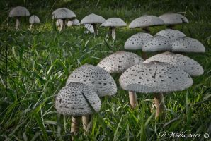 Magic Shrooms by Ray4359