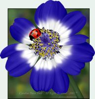 Flower and Ladybug by pixellorac