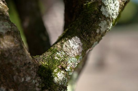 Tree Moss Detail by rcongreve