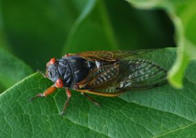 Cicada by SmileForGooper