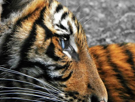 Eye of the Tiger by hhroxs2