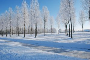 Frost on the trees by jerdenberg