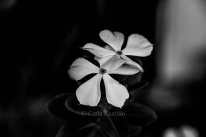 Fragile Creation~ by carlaacastillo09