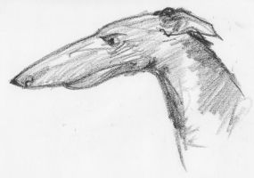 Sighthound 2 by clearwater-art