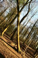 The Only Straight Tree by SharpePhocus