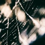 Webs.. by lomatic