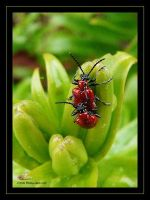 Bugz 2 by Insect-Lovers-Club