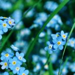Forget me not by VinTage90