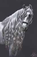 Andalusier - Andalusian Horse by ArtsandDogs