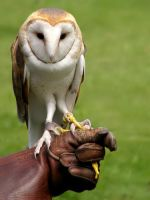 An Owl in Hand Beats Two... by TruemarkPhotography