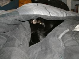 Blacky under my covers by RoXoS92