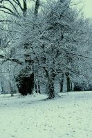 contrast in snow by maggot216