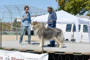 2014 Dog Festival, The Look Alike Contest 13 by Miss-Tbones