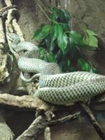 zoo photo 25 by VictoriWind