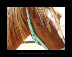 Horse 1 by eyadness