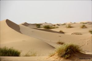 Dunes de sable by Patguli