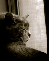 My cat 1 by NeonDance123