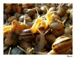Snails by cavallo13