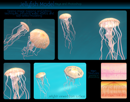 Jellyfish Model by Anceylee-Star