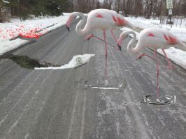 Hickerson collage flamingos tth2014 cor(1) by mellypaint331