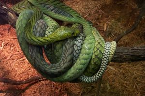 snakes by blk91gt
