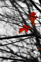 Autumn Leaves 1 by austinh2o