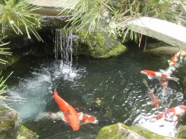 koi pond by listen2oldppl