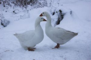 Love In The Snow by Aconitum-Napellus