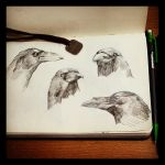 crow face by zephyr990