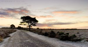 Backley Bottom, New Forest by JakeSpain