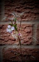 WALL FLOWER by ANDYBURGESS