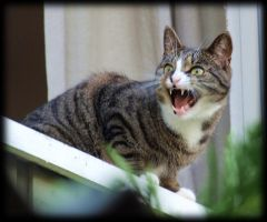 Me Cat Neighbour by pagan-live-style