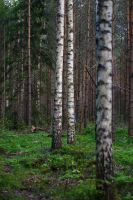 In the forest #1 by perost