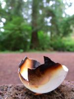 Burnt Eggshell by pokemontrainerjay
