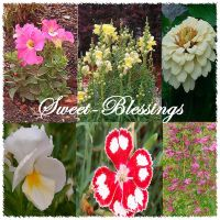 Sweet Blessings ID No. 3 by Sweet-Blessings