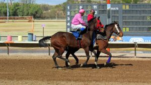 Racehorse Stock 28 by Rejects-Stock