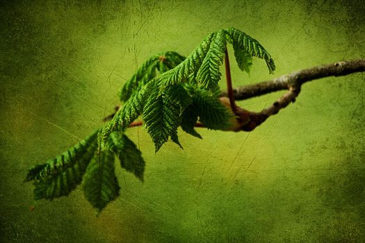 green leaves by lessthan2