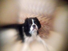 Lensbaby iPhoneography XXX by LDFranklin