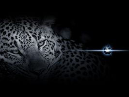 Leopard Inspired WP by djog