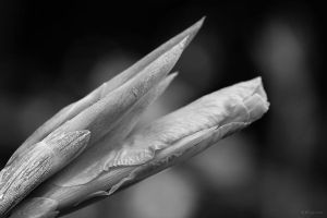 Softly and sharp... by LPeregrinus